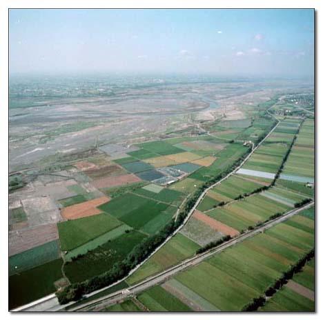 濁水溪中下游段兩岸之農作栽植茂密_圖示