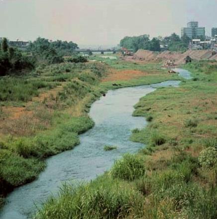 太平溪下游段河畔綠草如茵_圖示