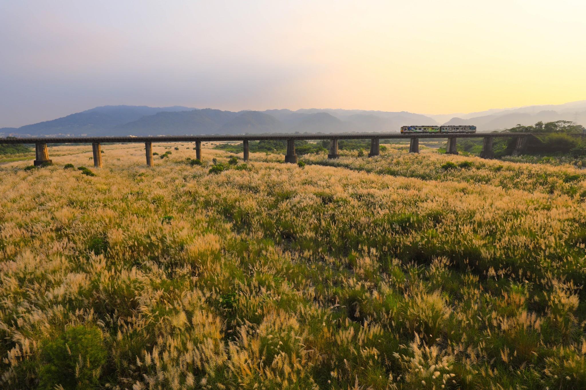火車與芒草之約_圖示